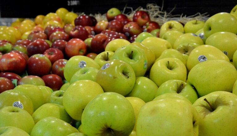 مقدار زیادی سیب درختی روی دست باغداران ماند